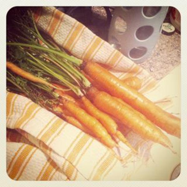 js carrots